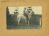 Black and white photograph of Martin Dyer on horseback.